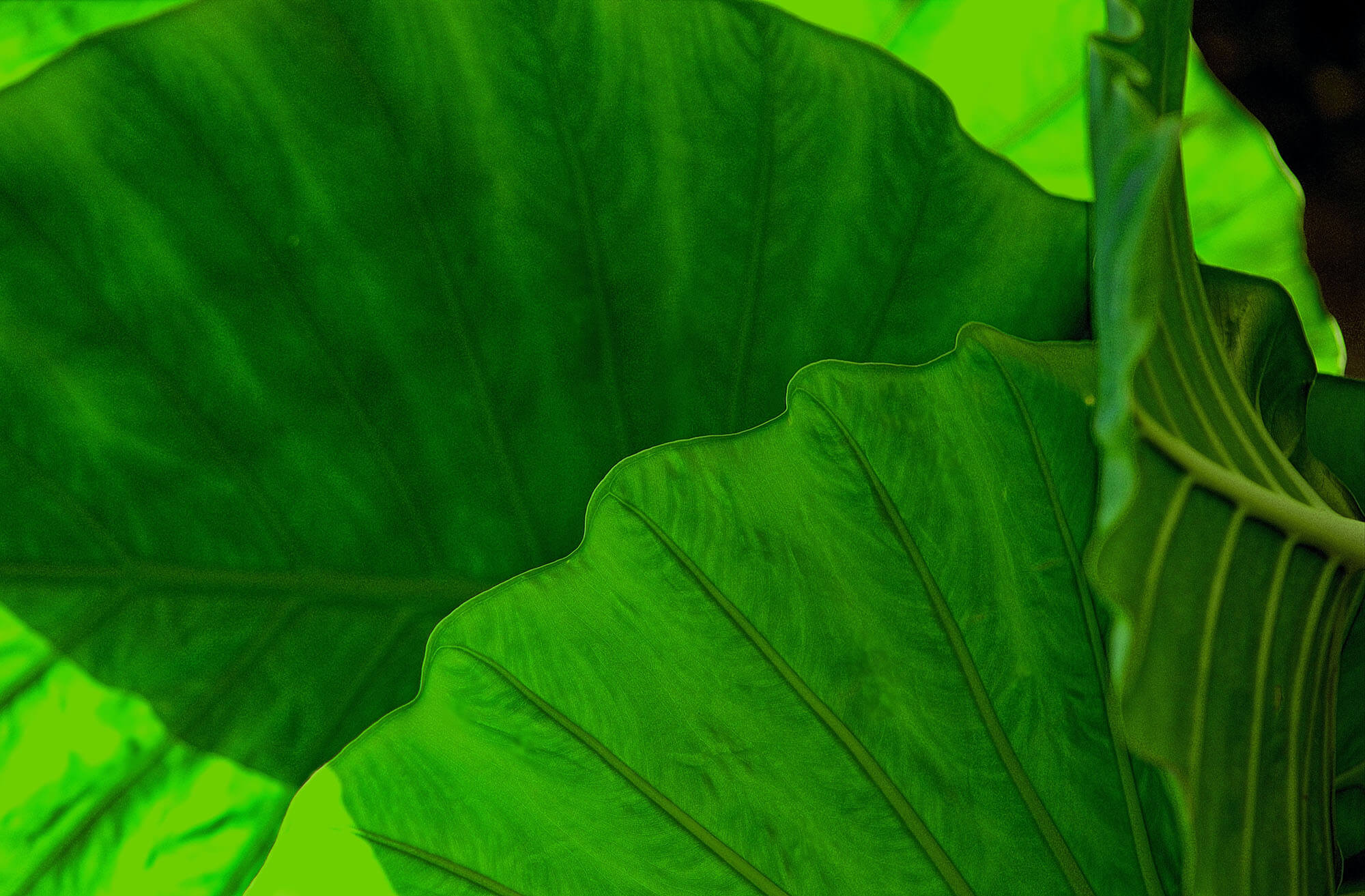 Why Can the Human Eye See More Shades of Green?